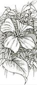 La fleur de lune de l'auteur